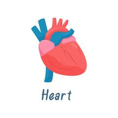 Heart, Human Anatomy Healthy Internal Organ Vector Illustration