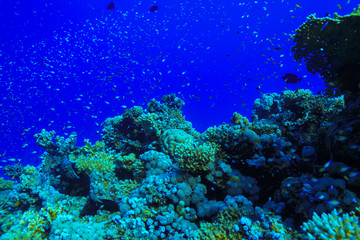 Coral reefs of the Red Sea, Egypt