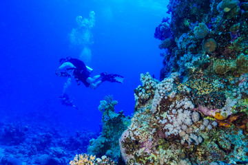 Diving the Red Sea, Egypt