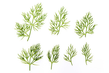 Green fresh dill isolated on white background.