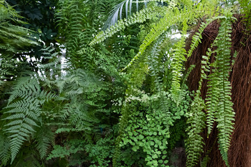 Many different ferns in one photo