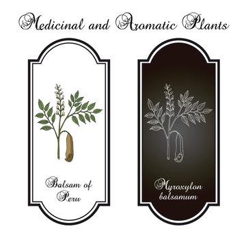 Balsam of Peru Myroxylon balsamum , medicinal plant