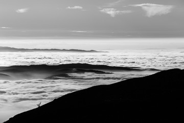 Beautiful view of Umbria valley (Italy) covered by a sea of fog, with trees silhouettes in the foreground