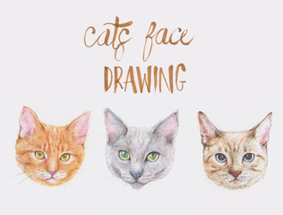 cats drawing pencil on white background,illustration