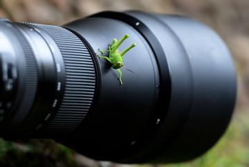 grasshopper above the camera lens