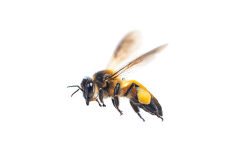 Foto auf Acrylglas Bienen A close up of flying bee isolated on white background