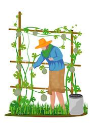 agriculturist manure melon plant vector design