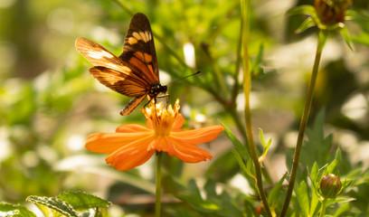 borboleta amarela