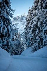 snow in the forest in the mountains alps - Switzerland