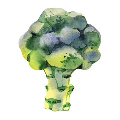 Watercolor vegetable broccoli isolated on a white background. Hand painting