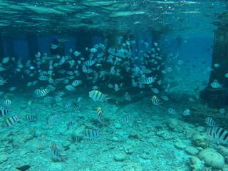 Pazifik,Tauchen,Fische,Philippinen