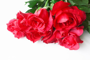 Beautiful rose flower isolated on white background .