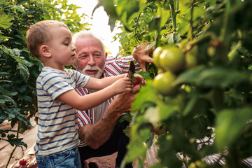 Grandpa and grandson working in garden