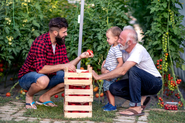 Three generations work in greenhause
