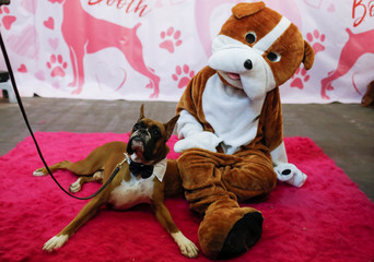 Devo, the Boxer, sits with a person in a dog costume in the Boxer breed booth during the AKC Meet the Breeds event ahead of the 143rd Westminster Kennel Club Dog Show in New York