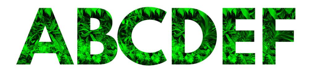 Fototapeta Wytnij literę i wstaw wraz z rosnącą rośliną. Część alfabetu. Ekologiczny alfabet.