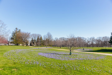 City park. spring landscape. blue flowers in spring park. Copy space for your text