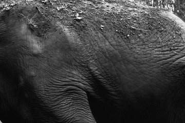 Elephant skin texture in black and white