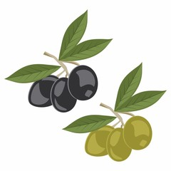 Vector illustration of olive branches