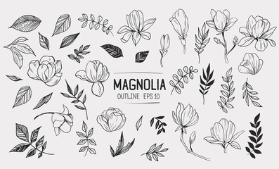 Set of magnolia with leaves. Floral elements for design. Vector. Isolated