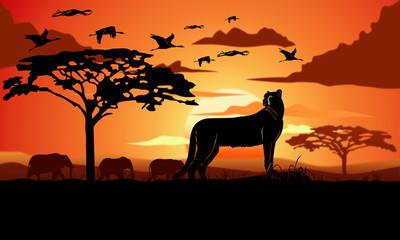 Cheetah - Ghepardo