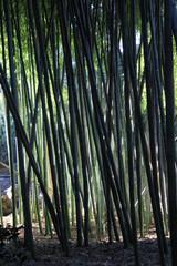 Bamboo by Skip Weeks