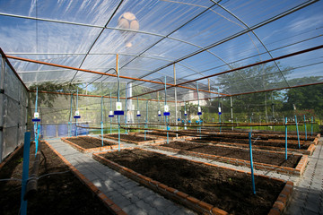 Vegetable Greenhouse in Countryside of Thailand