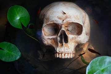 Skull in the water which has lotus tree and fish