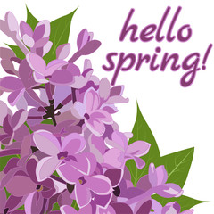 lilac flowers close-up with the words Hello spring