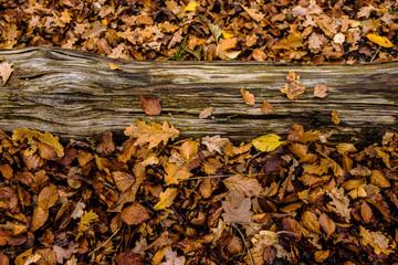 autumn fallen leaf on ground forest lake