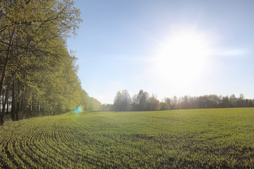 Landscape is summer. Green trees and grass in a countryside landscape. Nature summer day. Leaves on the bushes.
