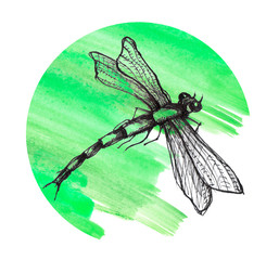 Black dragonfly on white background isolated. Dragonfly Graphic Realistic Line Ink Drawing. Hand-drawn illustration.Watercolor splash of green paint. Round logo element on a white isolated background