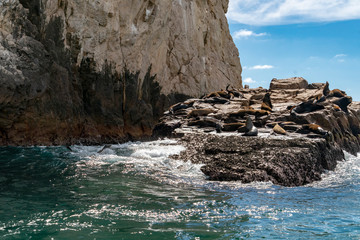 sea lion colony seals relaxing on the rocks of cabo san lucas