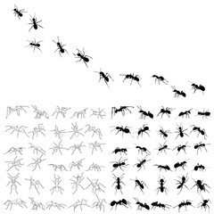 set of ant silhouette, isolated, vector