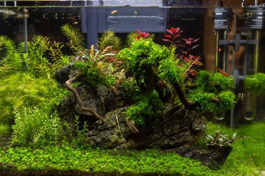 Small aquarium for inerior decoration