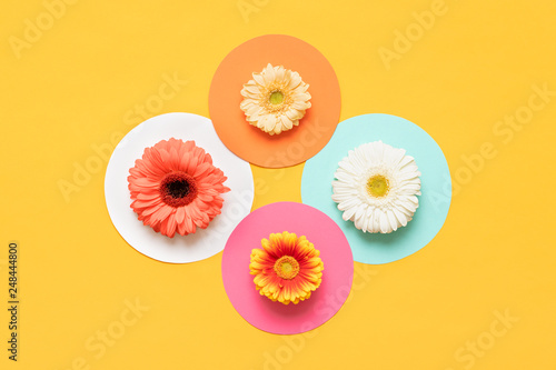 Happy Mother's Day, Women's Day, Valentine's Day or Birthday Pastel Colored Background. Flat lay mock up greeting card with beautiful gerbera flowers.