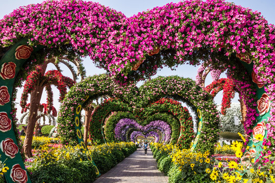 Dubai, UAE: Flower hearts in Miracle Garden  in Dubai