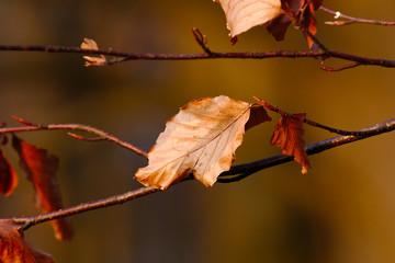Blatt am Baum mit brauner Färbung im Herbst Winter