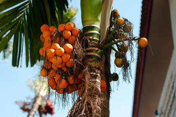 Palm trees and fruits