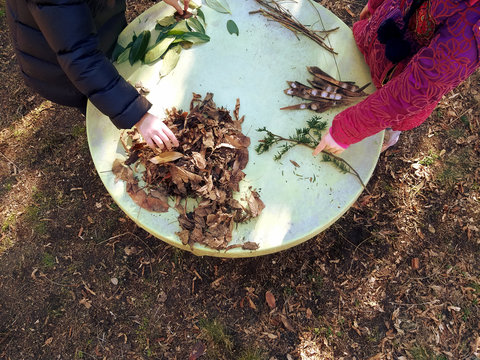little children playing, expolring and gardening in the garden with soil, leaves, nuts, sticks, plants, seeds during a school activity - learning by doing, education and play in the nature concept