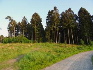 Solingen - Ohligs _ Ohligser Heide