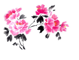 Ink illustration of beautiful pink peonies. Chinese painting. Hand drawn