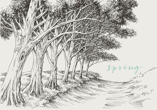 Artistic landscape, an alley in the park under the trees hand drawing