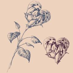 Fototapete - Heart shaped flower design elements
