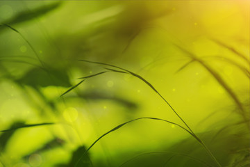 Artistic sunny bokeh grass background