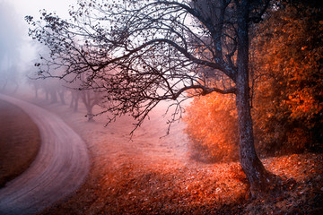 Magic meadow with trees and curvy road