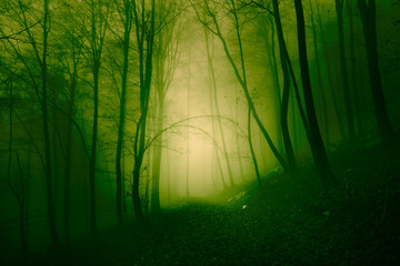 Wall Mural - Mystical yellow green foggy forest