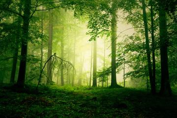 Mystical yellow green foggy fairytale forest