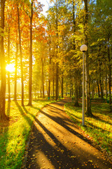 Autumn and yellow maple leaves in The new park of Moscow, fresh paths and the sun's rays through the crowns of trees. Vnukovo.