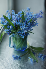 Flowers of the woods (scylla, scilla) in a blue cup on the window
